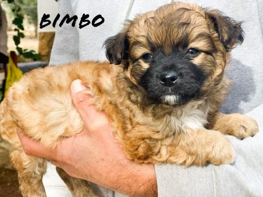 Bimbo y Junior