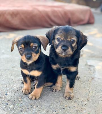 Hugo y Goya (Adopción Conjunta)