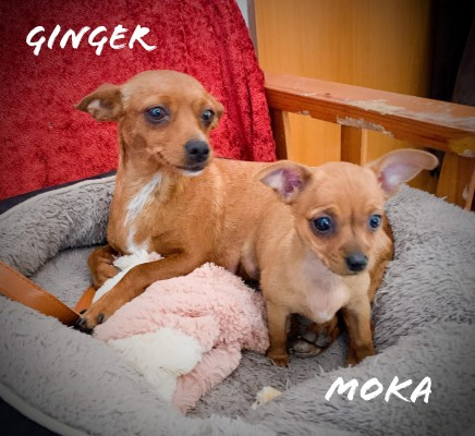 MAMÁ GINGER Y MOKA