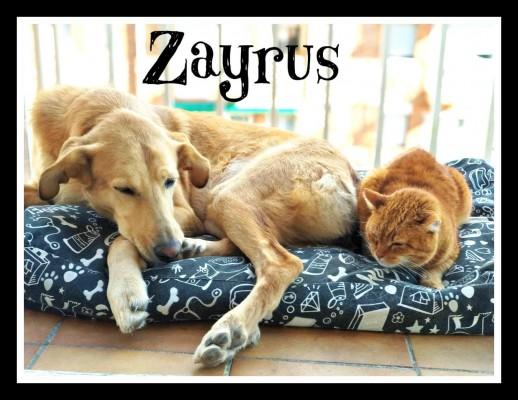 Zayrus